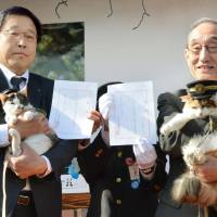 Cat 'stationmasters' Yontama (left) and Nitama are held by Wakayama Electric Railway Co. officials Thursday at an event to commemorate the 10th anniversary of introducing the first cat stationmaster on the railway. | KYODO