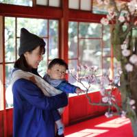 Bonsai Exhibition of Ume Trees with Blossoms