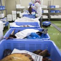 Venture brings freshest fish to cities, more money for fishermen
