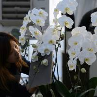 Japan's business gift culture says it with orchids