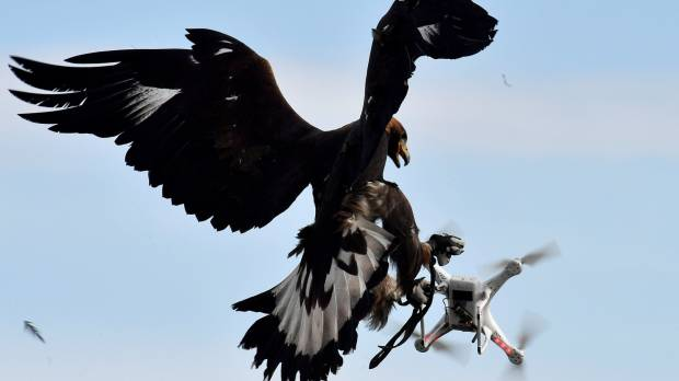 As new threat looms, French Army begins training eagles to catch drones