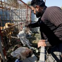 Mosul's ruined zoo's animals starved when war kept locals from feeding them