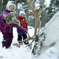 Arctic's indigenous Sami fete national day, centenary of first congress
