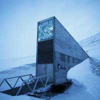 50,000 new samples sent to Arctic 'doomsday' seed vault