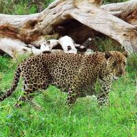 Japan's imports pressure nearly 800 endangered species: study