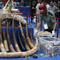 Domestic ivory market faces tighter curbs, fines as global scrutiny rises