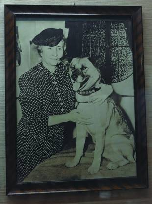 Activist Helen Keller is believed to be the first person to take an Akita to the United States.
