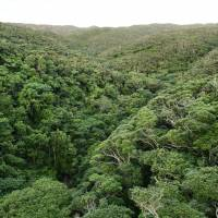 The Yanbaru forest has been nominated for UNESCO World Natural Heritage status, along with the islands of Iriomote, Okinawa Prefecture, and Amami-Oshima and Tokunoshima, both in Kagoshima Prefecture. | KYODO