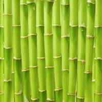 Bamboo, which contains high amounts of chlorine and potassium, can damage combustion equipment or the environment when burned as it is. | ISTOCK