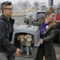 46 dogs, saved from slaughter, arrive in New York from South Korea