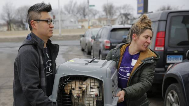 Rescued: 46 canines taken from South Korea dog meat farm arrive in NY