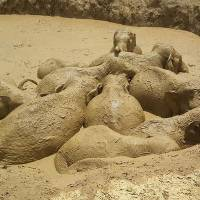 Farmers, conservationists rescue 11 wild elephants from Cambodia mud pit
