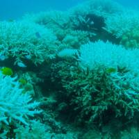 Great Barrier Reef sees second straight year of bleaching