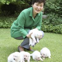 South Korea finds a home for two puppies Park left behind