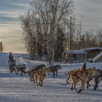 Father and son mush for lead in Alaska Iditarod race seen as deadly to dogs