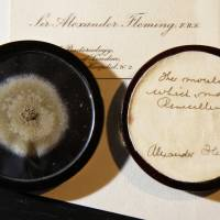 Mold from penicillin discoverer auctioned for $14,000