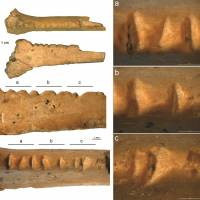 Decorated bird bone suggests Neanderthals had eye for aesthetics