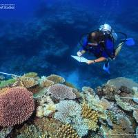 Great Barrier Reef may never recover from 2016 warming-driven bleaching: study