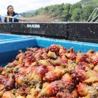 Signs of hope for Fukushima food producers shut out of overseas markets