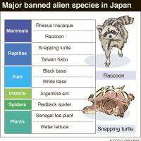 Japan's coveted cherry blossoms and other ecosystems threatened by alien species