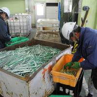 Workers at Nakadai Co.'s recycling plant sort plastic parts from printed circuit boards. | KYODO