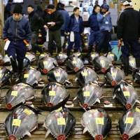 Rows of tuna are displayed at the Tsukiji market on Jan. 5. Tails are severed so that wholesalers can judge the quality of the fish.   KYODO