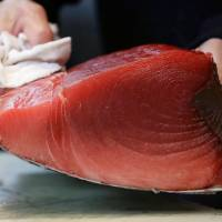 Wholesalers cut tuna in blocs before selling them to sushi restaurants or other customers.   KYODO