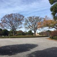 The grounds of the Imperial Palace offer a pleasant contrast to Tokyo's bustle.   KATHRYN WORTLEY
