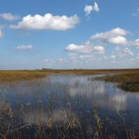 Waterworld: Little progress has been made in the world's largest ecosystem restoration project in the Florida Everglades since it was launched in 2000. | AFP-JIJI