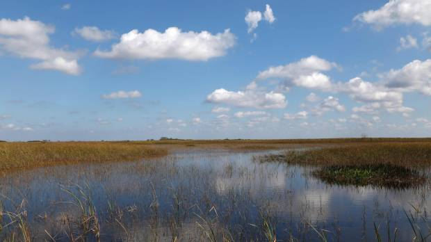 New urgency urged in fight to restore Florida Everglades