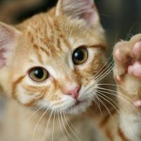 Want the cat to lend a paw?: handy Japanese phrases with 'te'