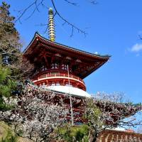 The Sanju no To pagoda at the temple has been designated an important cultural asset. | CHIBA PREFECTURAL TOURISM