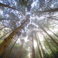 Oita Prefecture embarks on 'smart forestry' initiative