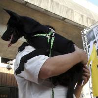 Consumption of dog and cat meat banned in Taiwan