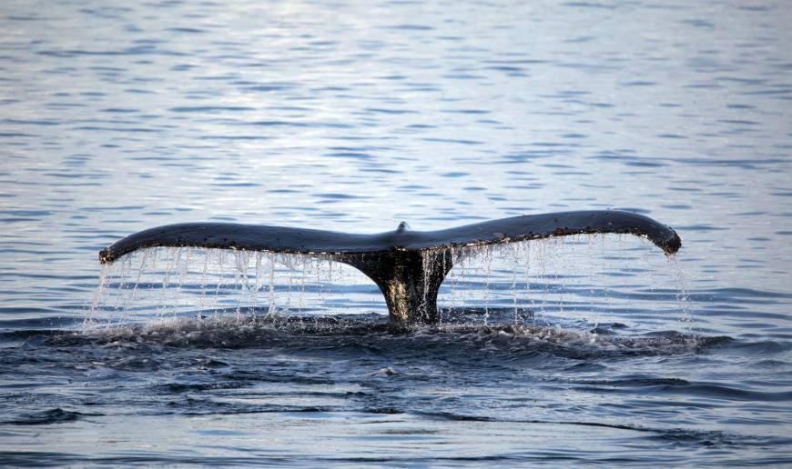 Whale cams reveal secret Antarctic feeding habits