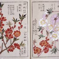 'Honzo Zufu' (illustrated book of plants), compiled by Iwasaki Kan'en (c.1844) | THE UNAUTHORIZED REPRODUCTION OF THIS IMAGE IS PROHIBITED