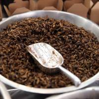 Insect-based cuisine has Australians bugging out