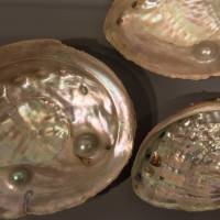 All that glitters: The captivating inside of a pearl oyster.   STEPHEN MANSFIELD