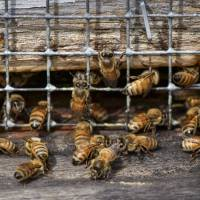 Survey finds U.S. honeybee losses improve from horrible to bad