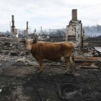 Three die in raging Siberian wildfires; Russia investigates possible negligence