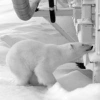 Time to ditch the polar bears? Climate change looks for a new image