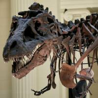 No bone could resist T. Rex's pulverizing bite, study says