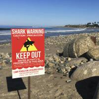 Shark bites off part of wading woman's thigh at Southern California beach