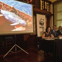Mexico's vaquita marina porpoise may be extinct by 2018 unless nets are banned: WWF
