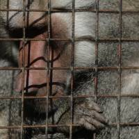 Animals still languishing in cages year after Buenos Aires zoo closure as traffic thunders by outside