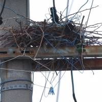 Metal clothes hangers that a crow has used to make a nest on a power pole could fall and cause a short circuit. | CHUNICHI SHIMBUN