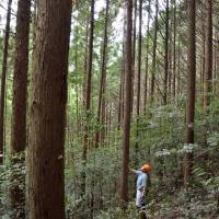 Government considering new tax for forest maintenance