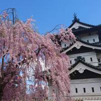 Aomori city sees bitcoin as way to attract overseas tourists