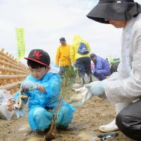 People plant pine saplings Saturday on the coast of Rikuzentakata, Iwate Prefecture, a city that was wiped off the Pacific coastline by tsunami spawned by the March 2011 mega-quake. | KYODO