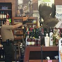 Peacock smashes up Los Angeles liquor store